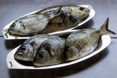 Meeresfisch frisch in den ovalen Edelstahlplatten Lizenzfreie Stockfotos