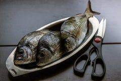 Meeresfisch frisch in den ovalen Platten des Edelstahls auf einem dunklen Ba Stockbilder