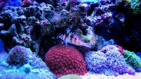 Meeresfisch im Marineaquarium Lizenzfreie Stockfotos