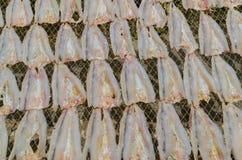 Meeresfischtrockner durch das Sonnenlicht lizenzfreies stockbild