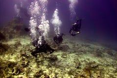 Meeresflora und -fauna Stockbild
