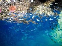 Meeresflora und -fauna Lizenzfreie Stockbilder