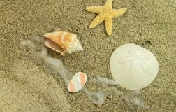 Meeresflora und -fauna auf dem geometrischen Winkel der Strandshow Lizenzfreie Stockfotografie