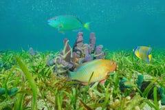 Meeresflora und -fauna auf karibischem Meer der bunten Fische des Meeresgrundes lizenzfreies stockbild