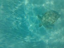 Meeresflora und -fauna im Wasser der Karibischen Meere Stockbilder