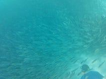 Meeresflora und -fauna im Wasser der Karibischen Meere Stockfoto