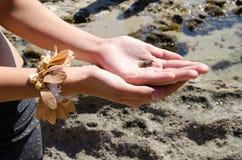 Meeresflora und -fauna am Ufer Stockfotografie