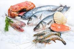 Meeresfrüchte auf Eis Stockbild