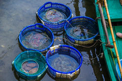 Meeresfrüchte in den buskets Lizenzfreie Stockfotografie