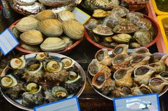 Meeresfrüchte am Fischmarkt in Pusan, Südkorea lizenzfreie stockfotografie