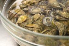 Meeresfrüchte im Wasser Lizenzfreies Stockbild