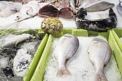 Meeresfrüchte zugebereitet Stockfotografie