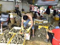Meeresfrüchtemarkt, Fischer im Abstreifen des Austernoberteils Stockfotografie