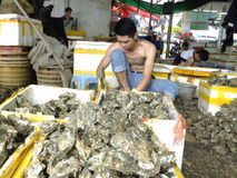 Meeresfrüchtemarkt, Fischer im Abstreifen des Austernoberteils Lizenzfreies Stockbild
