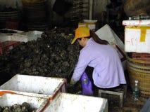 Meeresfrüchtemarkt, Fischer im Abstreifen des Austernoberteils Stockfoto