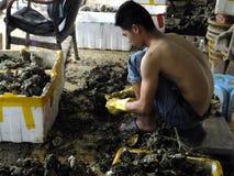 Meeresfrüchtemarkt, Fischer im Abstreifen des Austernoberteils Stockbilder