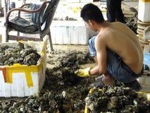 Meeresfrüchtemarkt, Fischer im Abstreifen des Austernoberteils Stockfotos