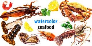 Meeresfrüchtesatz, frischer Hummer, Krabbe, Austern, Miesmuscheln, Garnele, Kalmar, Garnele, Meeresfrüchte, lokalisiert, Elemente lizenzfreie abbildung