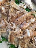 Meeresfrüchtezartheit Stockbilder