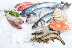 Meeresfrüchte auf Eis Lizenzfreies Stockfoto