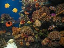 Meeresgrund Lizenzfreies Stockbild