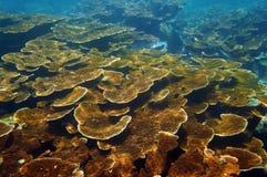 Meeresgrund mit gesundem Korallenriff Elkhorn Lizenzfreies Stockbild