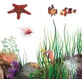 Meeresgrund. Seestern, Clownfisch, Seepferde, Oberteile. Lizenzfreie Stockfotos