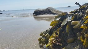 meerespflanze Stockfoto