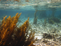 Meerespflanze Stockbilder