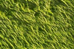 Meerespflanze Lizenzfreies Stockfoto