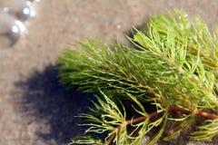 meerespflanze Stockbild