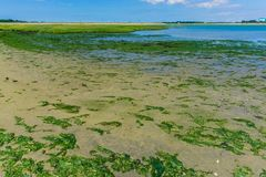 Meerespflanze auf dem Strandmeerblick Stockfoto