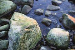 Meerespflanze auf einem Felsen auf dem Strand Stockfoto