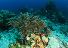 Meerespflanze auf Korallenriff Stockfotos
