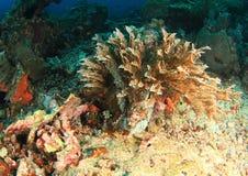 Meerespflanze auf Korallenriff Stockfotografie