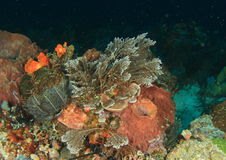 Meerespflanze auf Korallenriff Lizenzfreie Stockfotos