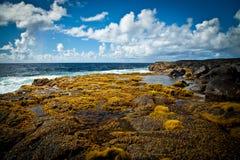 Meerespflanze bedeckte Lava Rocks Off die Küste von Hawaii stockbild