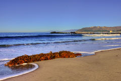 Meerespflanze in der Brandung Lizenzfreie Stockfotos