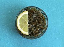 Meerespflanze in der Glasschüssel auf blauem Hintergrund Lizenzfreie Stockfotografie