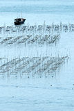 Meerespflanze fram Stockfotografie