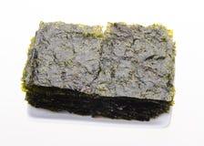 meerespflanze trockene Meerespflanze auf Hintergrund Lizenzfreie Stockfotos