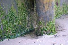 Meerespflanze und Algen auf hölzernem Pier Lizenzfreie Stockfotos