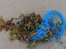 Meerespflanze und blaues Seil stockfoto