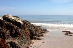 Meerespflanze und Felsen Stockbilder