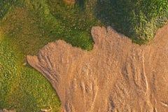 Meerespflanze und Sand Lizenzfreie Stockfotografie