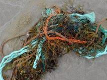 Meerespflanze und Seil lizenzfreies stockfoto