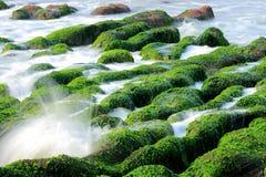 Meerespflanze und Spray Lizenzfreies Stockfoto