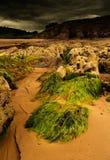 Meerespflanzelandschaft stockbild