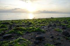 meerespflanzen Stockbild