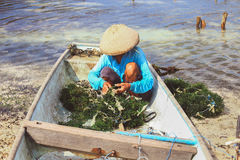 Meerespflanzenbauernhof Lizenzfreies Stockfoto